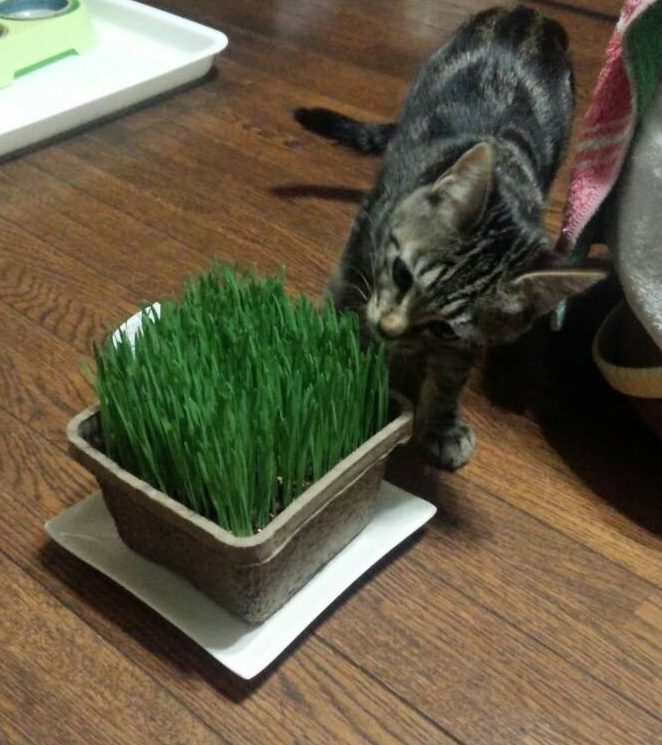 おいしい草あります