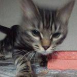 猫と遊ぶ時間は1日どのくらい遊べばいい?
