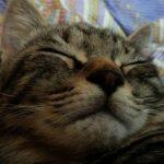 ネコさんにとっての暑さ感覚は?快適な室内温度は?