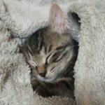 猫さんの平熱は?脈拍や呼吸数は?