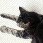 ネコさん体調が悪い時の行動