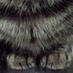 ネコさんの足って
