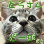 【ミニとらさん動画2】ミニとら猫じゃらし