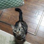 猫さんのジャンプ力ってどのくらい?