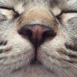 猫さん鼻の役割~猫さんの鼻は濡れている?