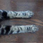 ネコさんの爪について