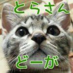 【とらさん動画20】全然相手してくれない!
