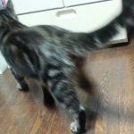 猫さんトイレ前後にダッシュ!の理由