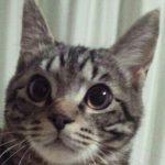 猫さん耳・聴覚について
