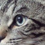 猫さんの目について~視力はいい?
