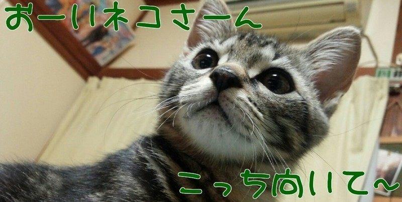 おーいネコさーん こっち向いて~
