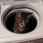 猫さんが休憩したくなるところはどこだろう