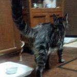 【日常】猫さん触ろうとするとぷいっとされるときありません?