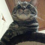 【日常】猫さんタワーとらさん