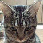 【日常】猫さんの謎行動ってありません?