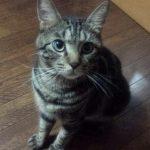 【日常】猫さん無性にかわいく見えるときありますよね