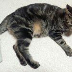 【日常】猫さん獲物やおもちゃを寝床や休憩所に持ってきたりしますよねー