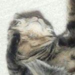猫さんあごや頭をなでられるのが好きな理由